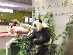 """全球首只塑化大熊猫这样""""复活"""""""